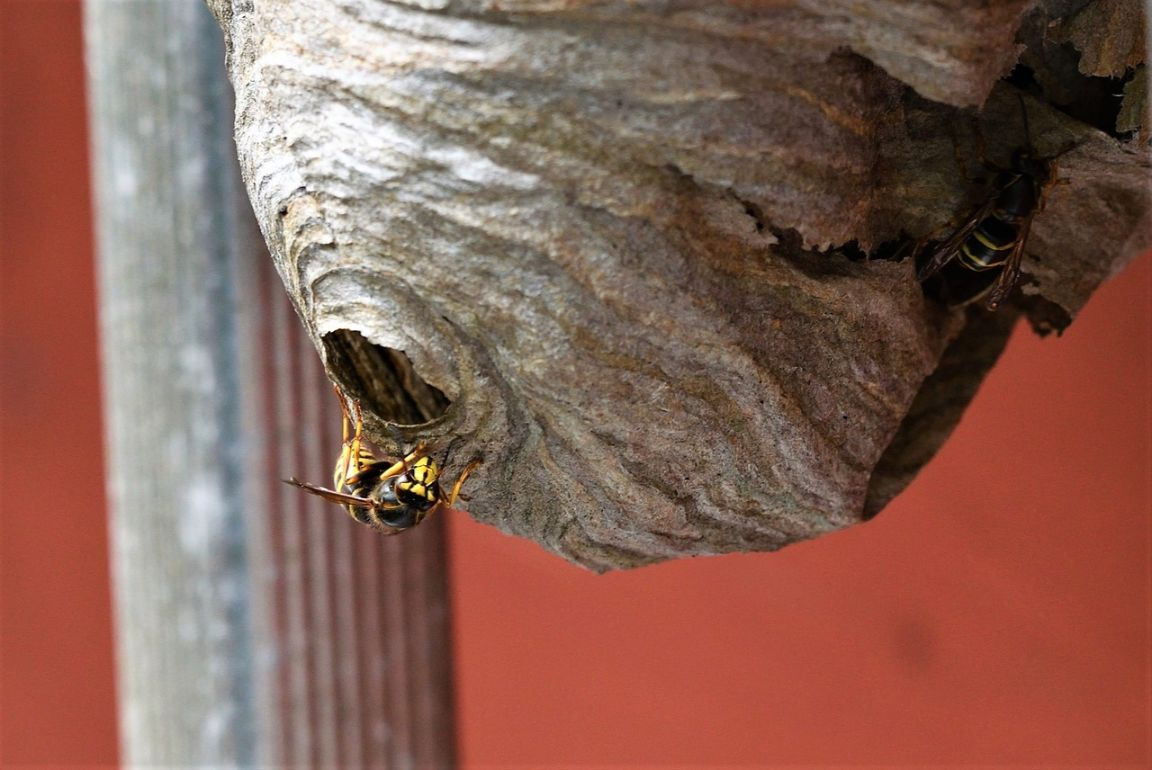 Bee and Wasp Removal – Why Leave It to the Pro