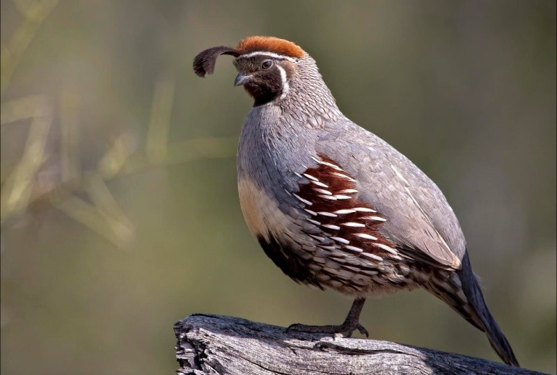 Taking The Kids Hunting? Consider A Quail Hunt For Something Different
