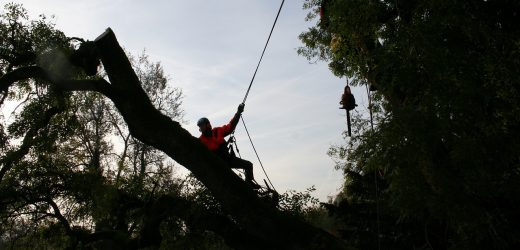 Reasons To Contact Tree Specialists Right Away – A Fundamental Guide