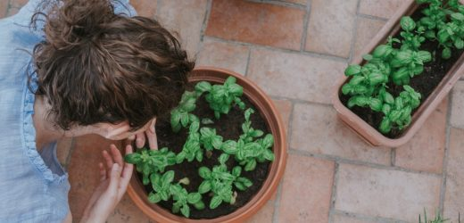 Best Ways to Grow Your New Garden – An Extensive Guide You Should Refer To