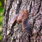 How to Remove Bats from Your Property – A Must-Read Guide